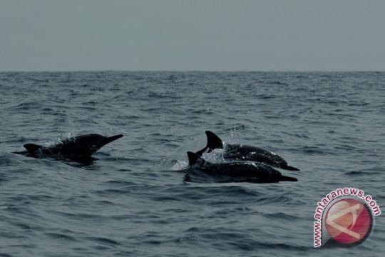 SAR pantai Parangtritis evakuasi lumba-lumba terdampar