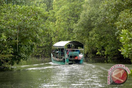 Babel kembangkan 500 hektare wisata mangrove Belitung