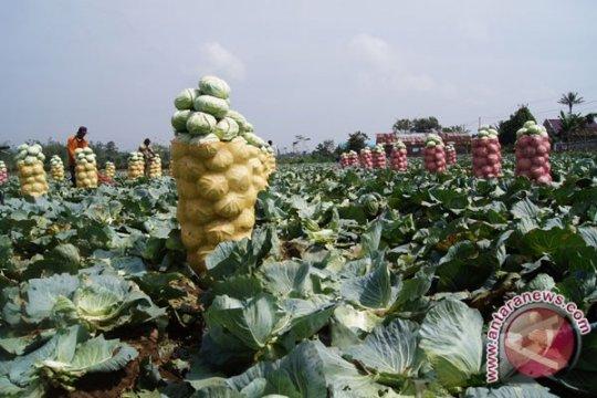 Petani Lampung Barat tunda masa tanam