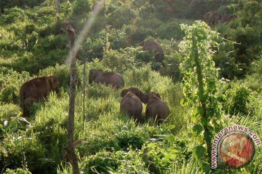 Bengkulu segera jalankan program koridor gajah sumatera