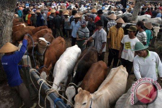 RPH Giwangan Yogyakarta buka layanan pemotongan hewan kurban