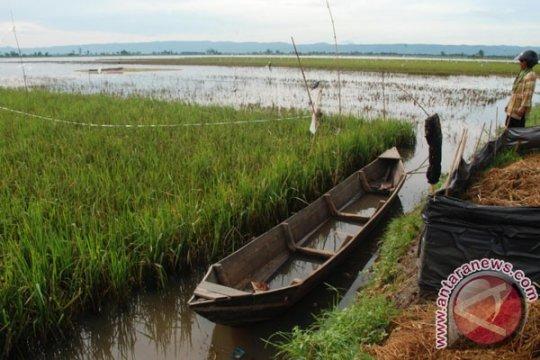 Ratusan hektare lahan di Nganjuk terendam