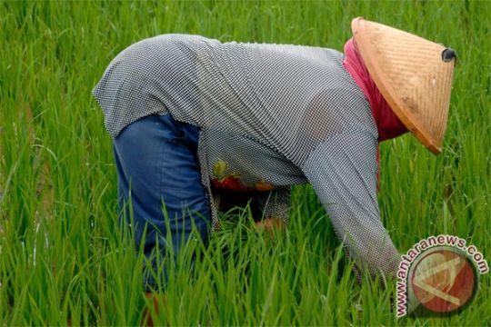 JCI berharap kepentingan petani lokal utama
