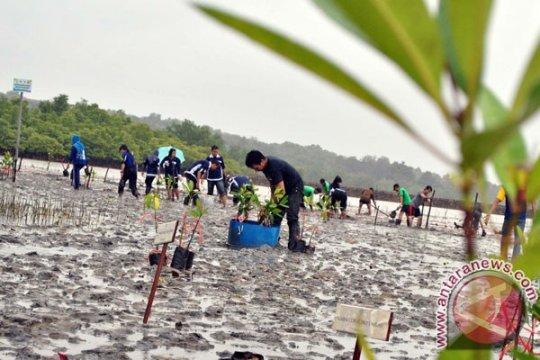 6.000 pohon Mangrove ditanam di Batam