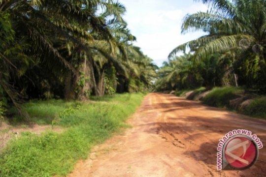 Peremajaan sawit rakyat di Sumsel sasar 14.900 hektare