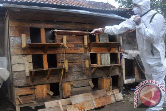 Kematian ratusan hewan unggas di Garut meluas