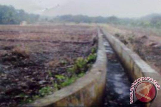 Puluhan hektare sawah di Agam terancam kekeringan