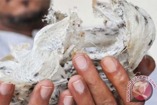 Residivis tertangkap tangan curi sarang walet