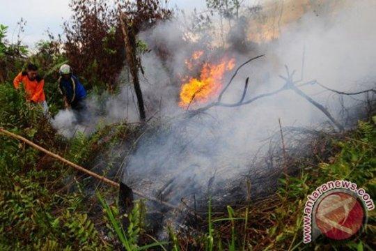Curah hujan rendah pengaruhi kebakaran lahan gambut