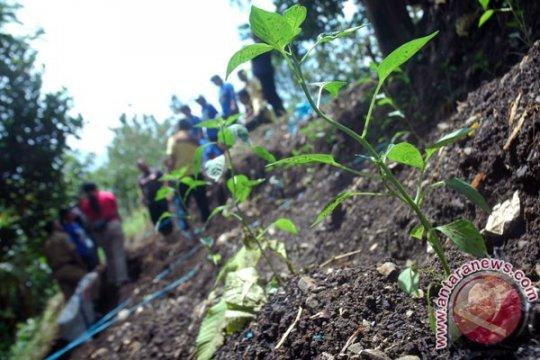 """Urban Farming"" solusi ketahanan pangan di Surabaya"