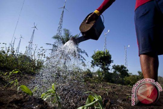 Pemprov Babel bangun 500 hektare pertanian sorgum