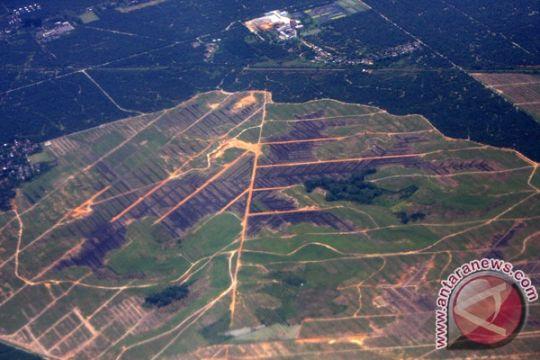 Walhi: 608.913 hektare lahan hutan Jatim kritis akibat eksploitasi tambang