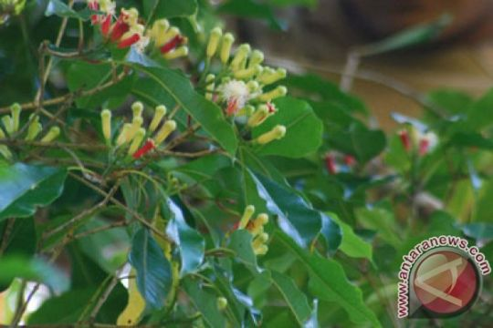 FK UGM teliti tanaman untuk obati kanker