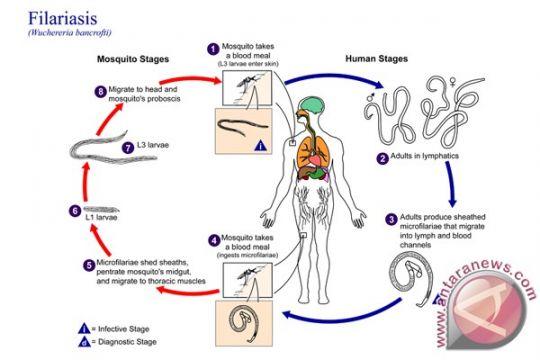 Simulasi table-top antisipasi kedaruratan penyakit zoonosis