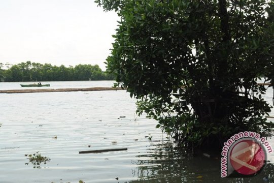 Ribuan bakau ditanam kembali di Bali tol