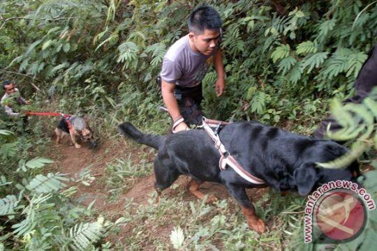 Badan SAR Nasional kerja sama pengoperasian anjing pelacak