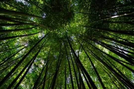 "Hulu Sungai Selatan ""surga"" tanaman bambu"