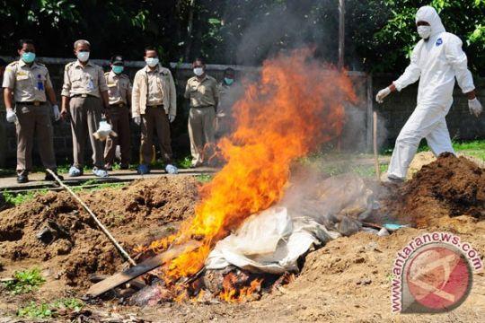 Balai Karantina Pontianak musnahkan ratusan kilogram daging ilegal