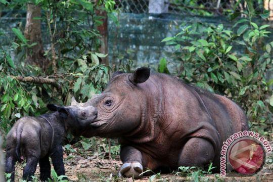 58 badak jawa hidup di Ujung Kulon