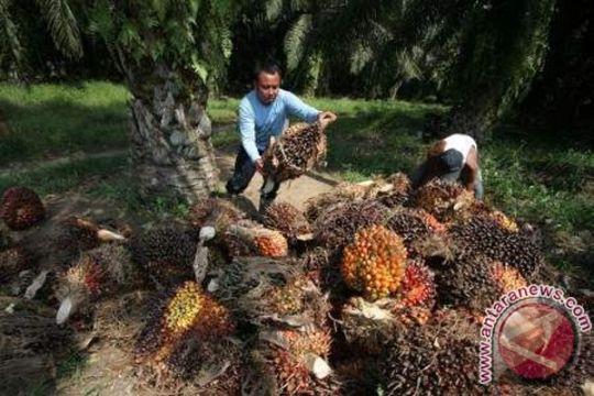Salahi ijin lahan, warga jarah kelapa sawit Agro Bukit