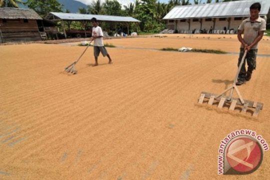 Wamentan bilang Indonesia sudah swasembada beras