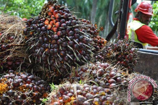 Malaysia sebut WTO setuju bentuk panel untuk periksa aturan sawit EU