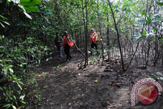 75 persen mangrove Asia Tenggara ada di Indonesia