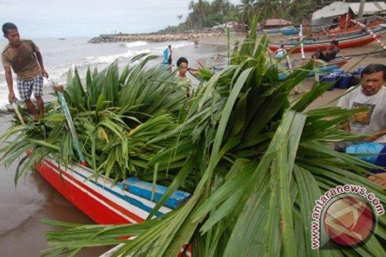 Ketegasan KKP perangi pencurian ikan tingkatkan volume ikan pelagis