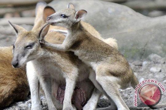 BKSDA proses 12 orang penyelundup hewan dilindungi ke Malaysia