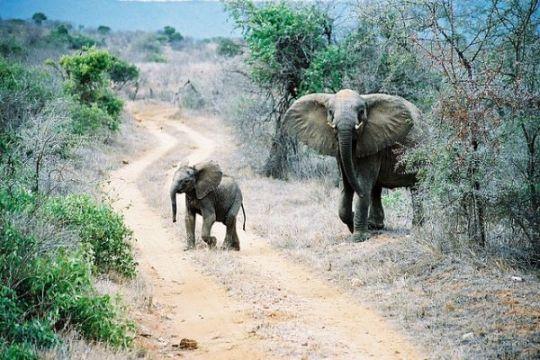 PM Kenya minta bantuan internasional atasi perburuan