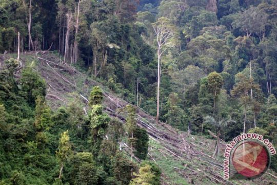 Perambah rusak kawasan hutan Bengkulu