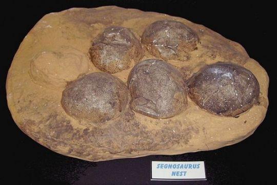 India akan hentikan penjualan ilegal telur dinosaurus