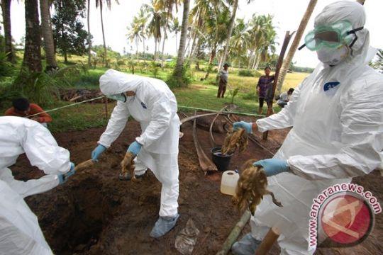 Virus H5N1 menggejala di Pekanbaru