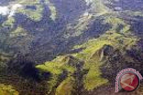 Walhi: hentikan perambahan hutan Seulawah