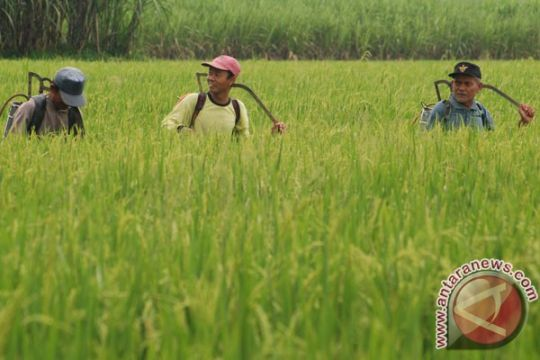Target produksi padi tak berubah