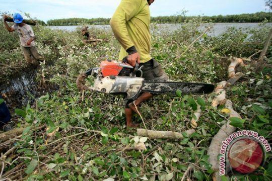 Gubernur: kondisi hutan mangrove Gorontalo sangat memprihatinkan