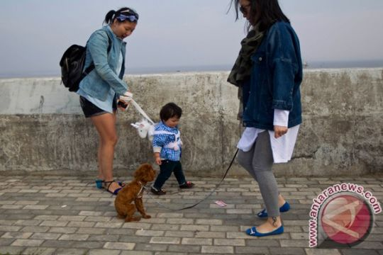 China larang jalan-jalan bawa anjing setelah perempuan melahirkan prematur