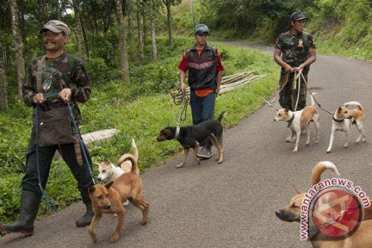 Ratusan anjing-kucing di Cianjur-Jabar divaksinasi rabies