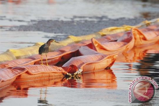 Enam aktivis Greenpeace panjat anjungan minyak Shell