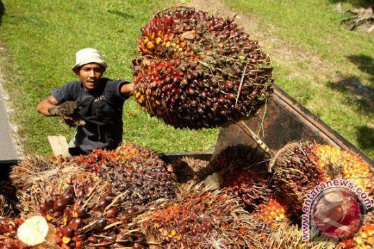 Anggota DPR dukung percepatan hilirisasi produk sawit