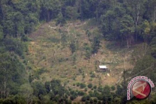 Hutan masyarakat Bengkulu Tengah masuk HGU