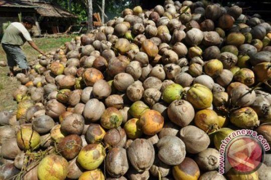 Padang Pariaman hasilkan 35,6 ribu ton kelapa