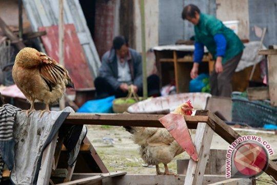 Warga China manusia pertama yang terinfeksi flu burung H10N3