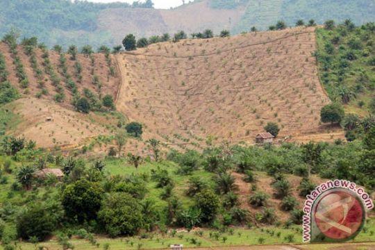Wamentan optimistis kelapa sawit bantu penuruan emisi