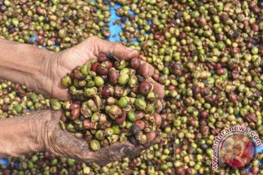 AEKI: Panen kopi Lampung turun 50%