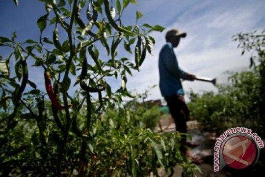 Yogyakarta kembangkan pertanian perkotaan