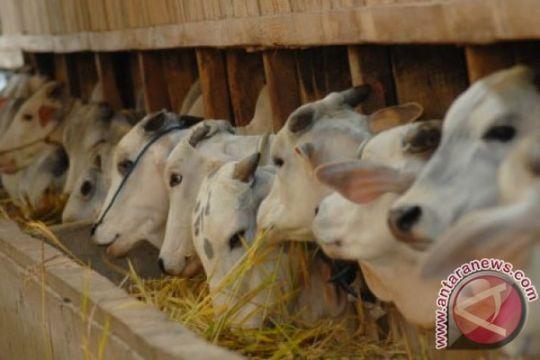 RNI akan bangun peternakan sapi terintegrasi perkebunan tebu