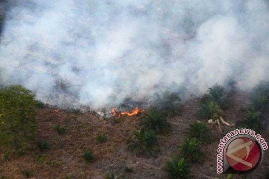 Damkar: bentuk posko kebakaran lahan Palangka Raya