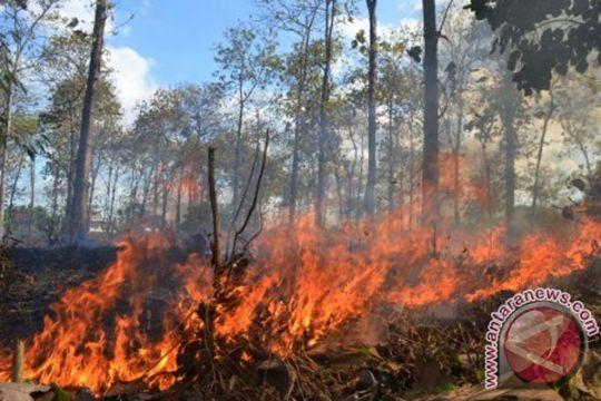 Hutan lereng Sumbing terbakar