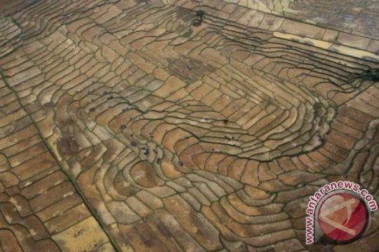 Kementan siapkan subsidi asuransi usaha tani padi